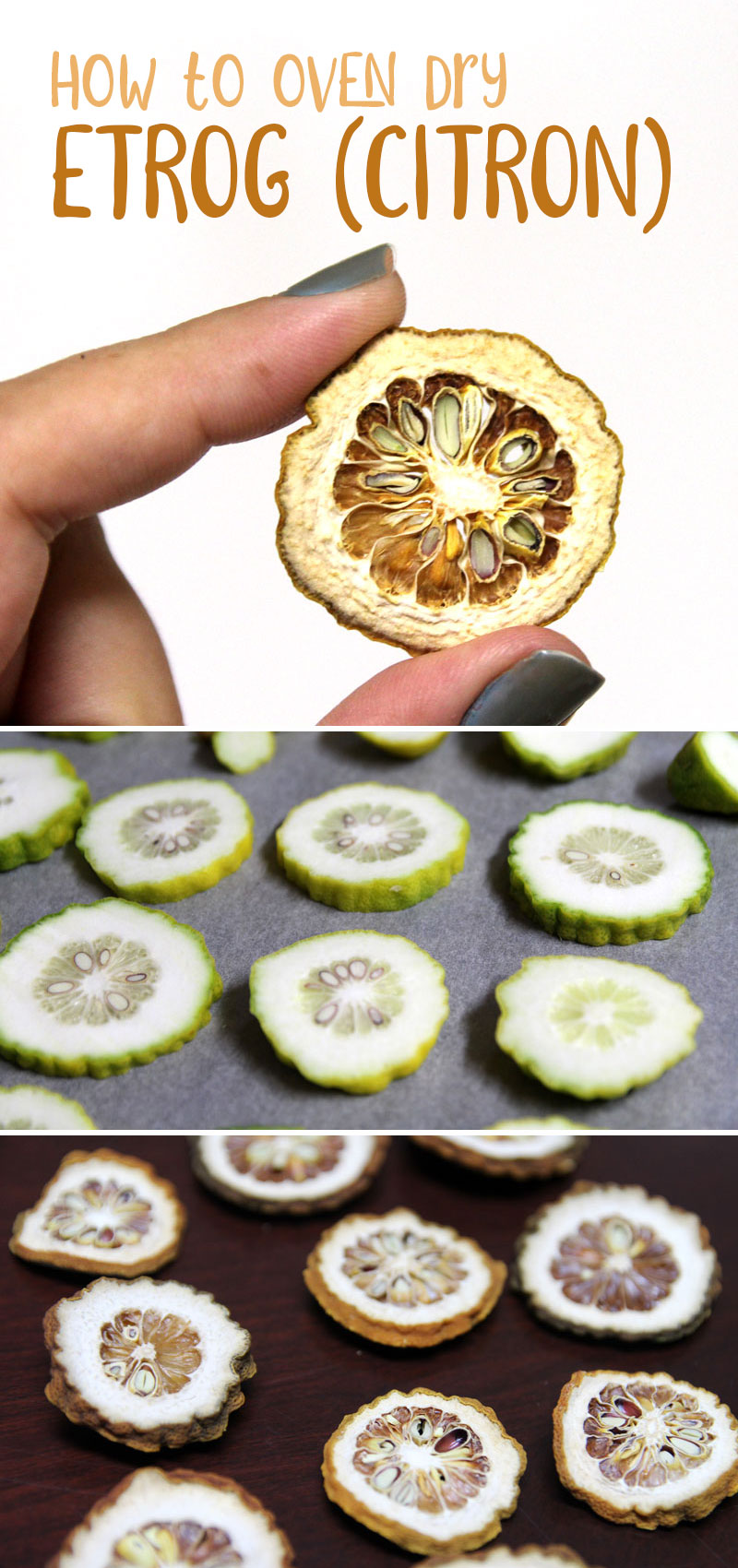 Click to learn how to make dried etrog - a great alternative to esrog jam! The thick skin gives this dried citrus fruit tutorial a unique spin, and it's great for crafts such as DIY Sukkah decorations. Make it right after Sukkot and save for next year.